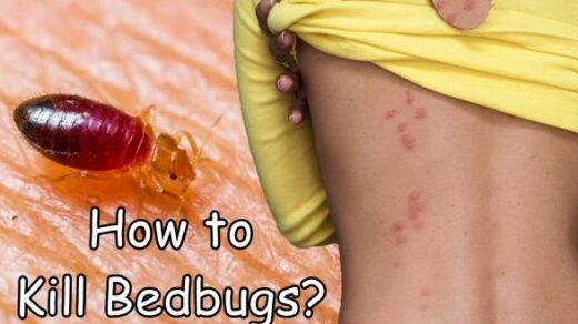 How to Kill Bedbugs - Effective Ways to Get Rid of Bedbugs